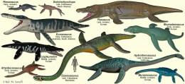 Triassic Sea Life