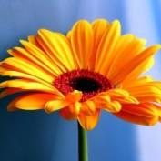 dharma352 profile image