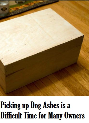 Picking Up Dog Ashes Emotional Time For Owners