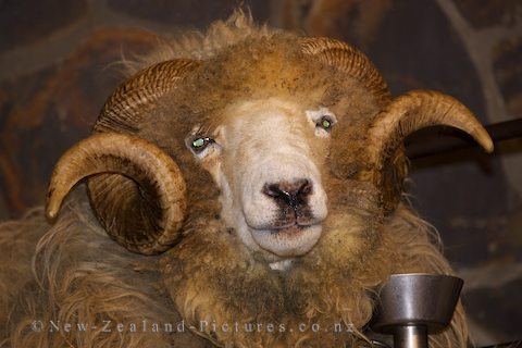 The 'Giant' Sheep: Ram Drysdale.  It costs $20 to pass through and along the Smugglers Route to Bumble Town.