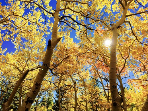 Mabon is the tilt from Summer into Fall.
