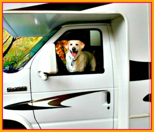 Put your things and your dog in your travel unit and you're ready to go!