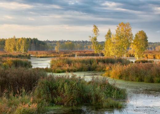 Losiny Ostrov National Park in Balashikha, Moscow Oblast, Russia.