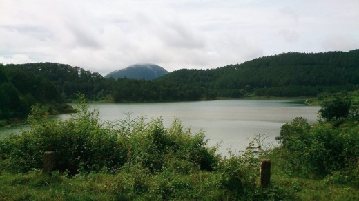 The emerald lake looms behind bushes and pine forests