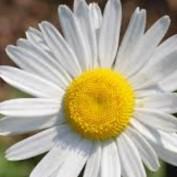 DaisyCloud profile image