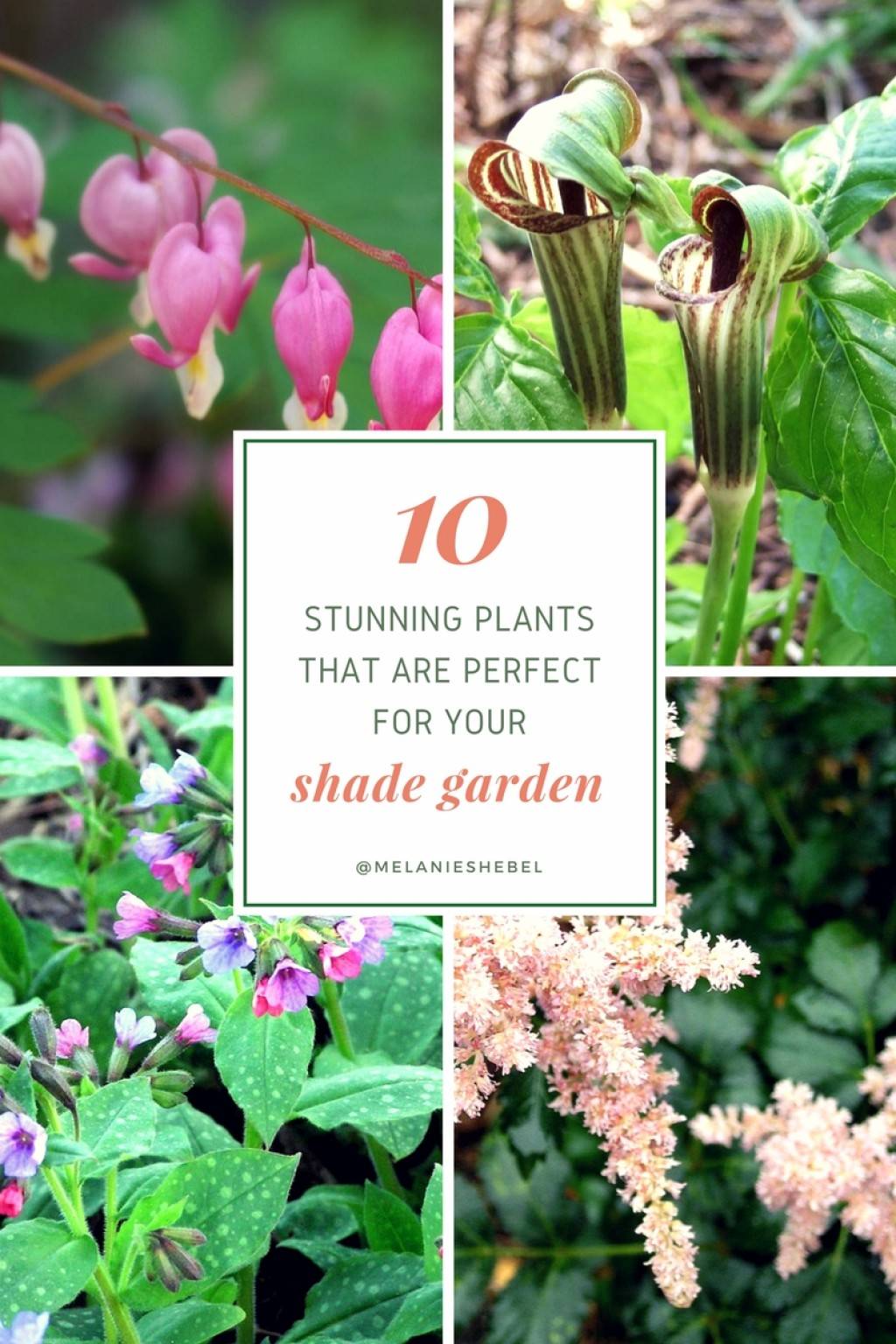 Shade Rock Garden Plants