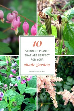 10 Perfect Plants for a Shade Garden