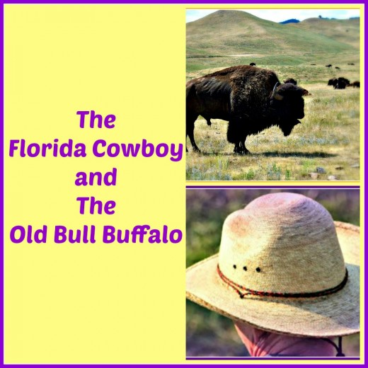 The story of the day when a novice cowboy and a bull buffalo came face to face on the South Dakota plains.