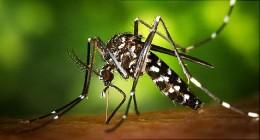 A Mosquito Born Virus