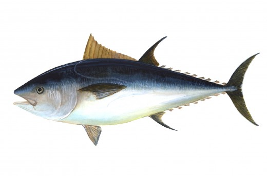 Fish is the most expensive source of collagen Type I.