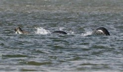 Has the Loch Ness Monster finally been proven with new photo?