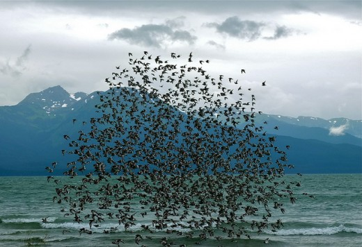 """""""Take Shelter"""" uses imagery reminiscent of """"The Birds"""" in order to set an ominous tone."""