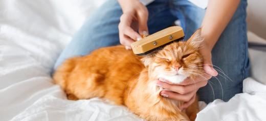 Cat Care & Feeding