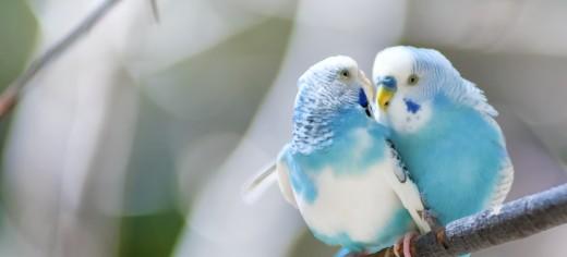 Bird Types