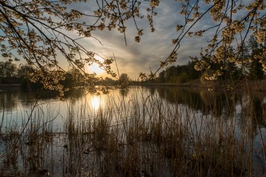 Oedlerteich at sunset, Kirchspiel, Dülmen, North Rhine-Westfalia, Germany