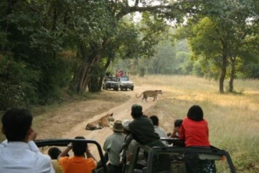 Tiger Safari on Jeep