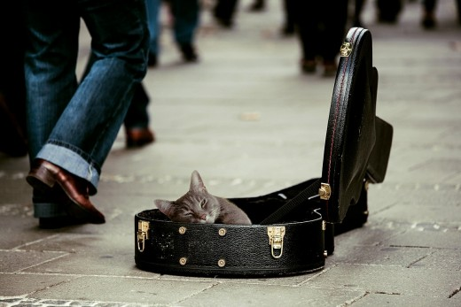 """Don't Tell Me to Get a Job---I Am only a Cat""."