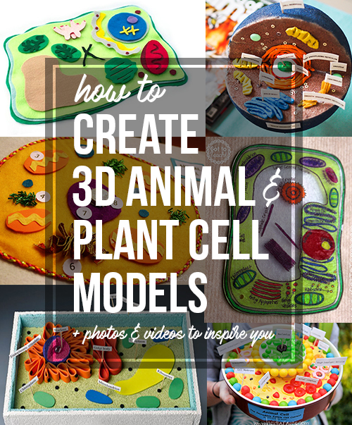 how to create 3d plant cell and animal cell models for science class rh owlcation com