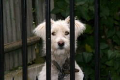Understanding What Dog Fence Systems Are