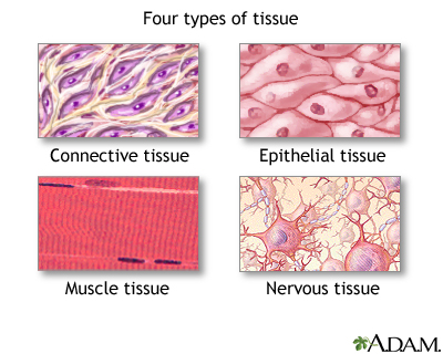Skin tissues can easily be damaged by various factors like harmful UV rays, smokes and others.