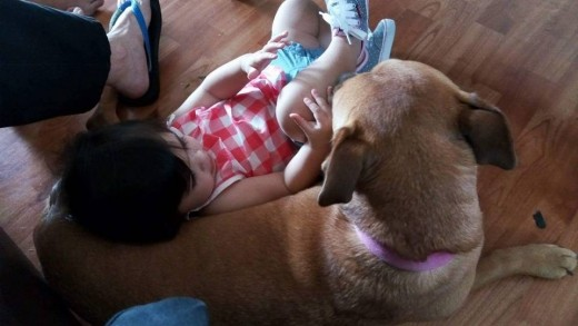 My niece Sabreena, who purposely put herself in the position of laying on Angel's middle. She did this because she knew Angel would let her. Sabreena's own dog would not allow her to do this.