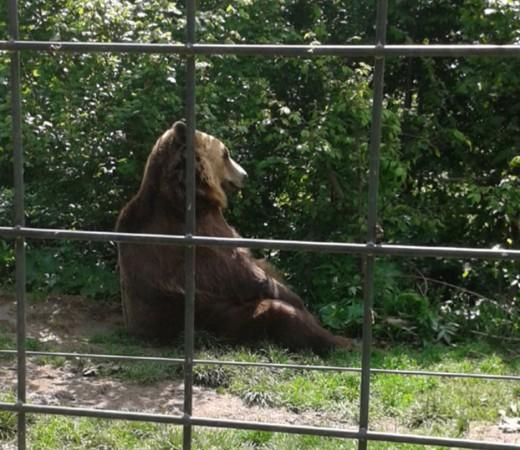 Ursi relaxing