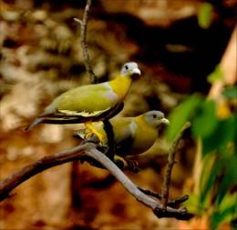 Indian Bird at Bharatpur