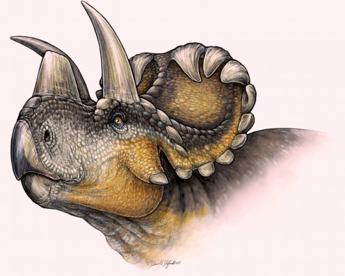 Wendiceratops, by Danielle Dufault.