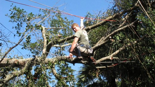 Worker clears tree branches lying on electrical wires at the Alligator farm in St. Augustine