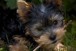 Keep Your Puppy Safe With These Vaccines
