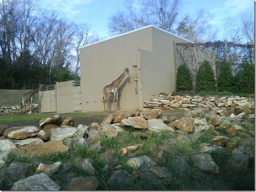 Giraffe exhibit at the Greenville Zoo in Greenville, SC.