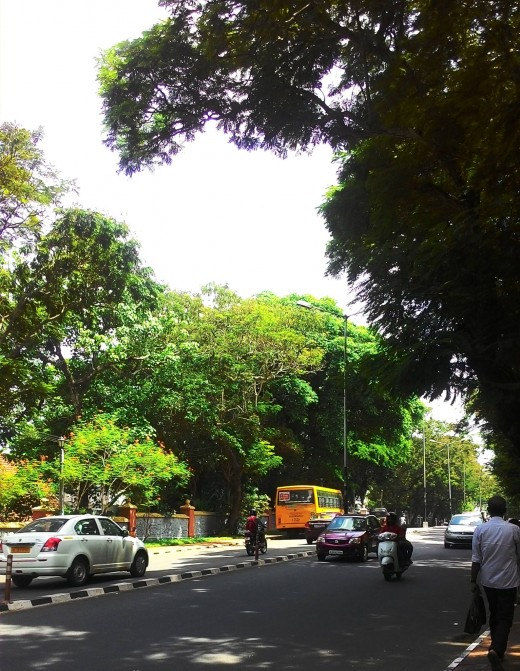 Trivandrum - one of the greenest (and cleanest!) cities in India.