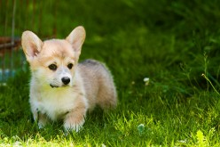 Five Cutest Dog Breeds