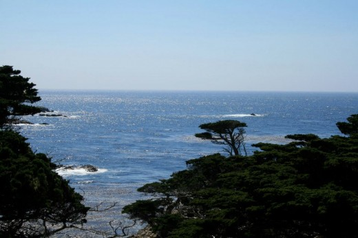 Even easier trails for novice hikers can offer stunning views, like this view of Monterey cypress trees from the Cypress Grove Trail at Point Lobos.