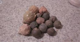 "A small collection of the ""wasp nurseries,"" the galls from oak trees."