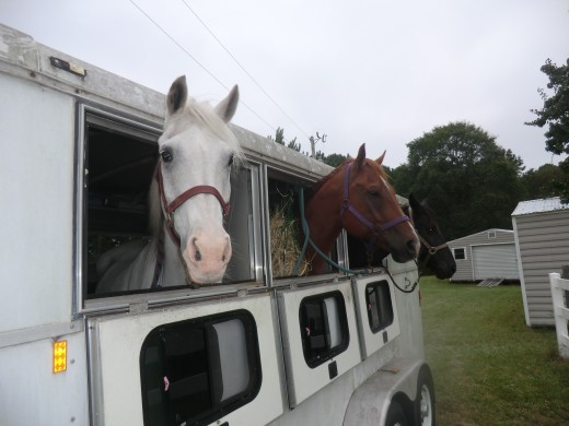 The horses were hauled inland where they still experienced wind and rain