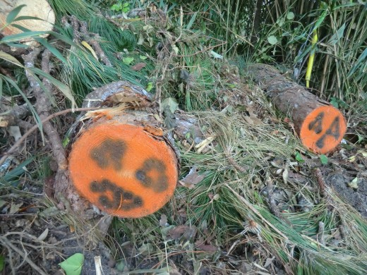 Locals painted Halloween pumpkin faces on many of the downed limbs facing traffic, making what could seem tragic, a bit more festive... we make the most out of what God gives us and oddly or not so, that makes people smile.