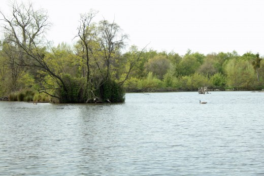 Lodi Lake has boating, a nature trail, barbecue areas, and plenty to do for families looking for a day outdoors.