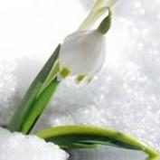 Winter Wildflower profile image
