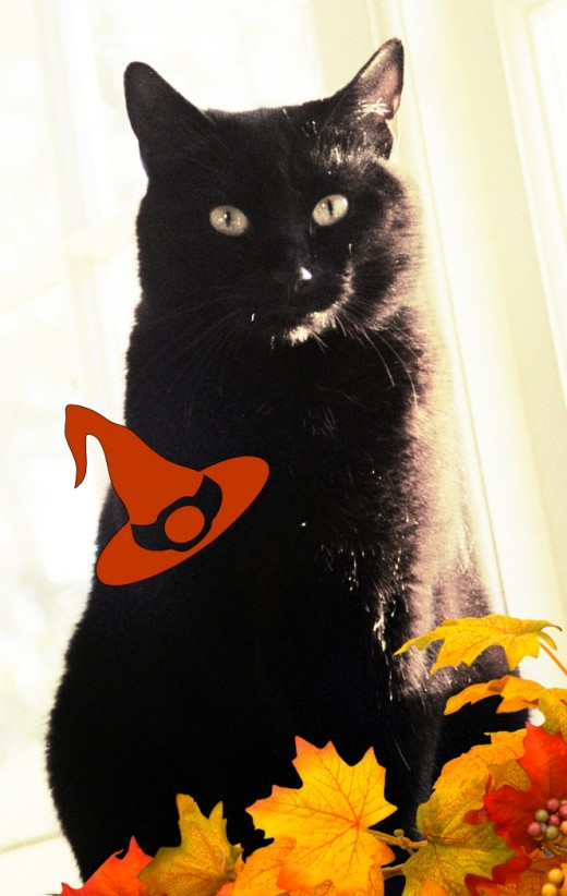 black cats are the most popular Halloween animal.