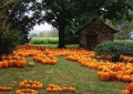 Jack-o-lanterns and carved pumpkins