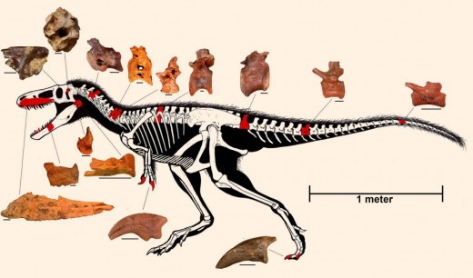 Projected Timurlengia anatomy, by Todd Marshall.
