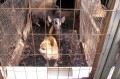The ugly truth about puppy mills