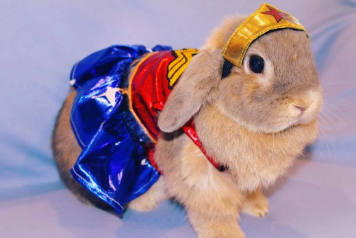 Our bunny in costume (Wonder Woman)