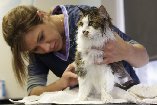 Groom your cats and cut their nails once in a while. Make sure not to hurt them.