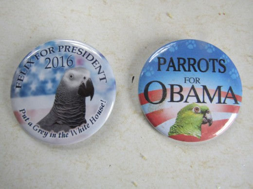 How will the all important parrot vote effect the 2016 election? - Photo by George Sommers