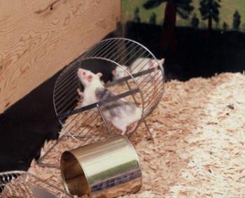 Rat Family Park