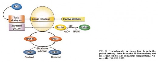 Polyol Pathway is activated during Hyperglycemia bouts but at yet an undetermined level in Humans.
