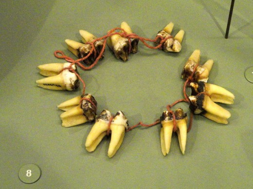 Necklace, tapir teerh, Yanomami - South American objects in the American Museum of Natural History