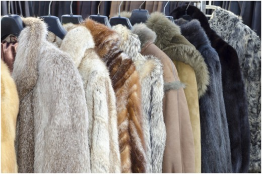 There are many types of furs available to match your tastes and budget.